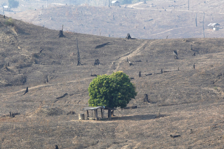 Feb. 24, 2012. One green tree left in hills of burnt brown and deforested land, near Mae Chaem, northern Thailand