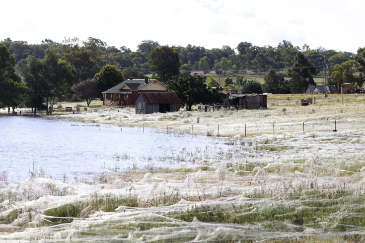 March 6, 2012. A house is surrounded by spiderwebs next to flood waters in Wagga Wagga, Australia.